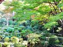 京都三千院の紅葉