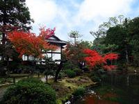 京都等持院の紅葉