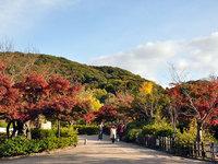 京都円山公園の紅葉
