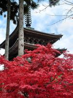 京都醍醐寺・三宝院の紅葉