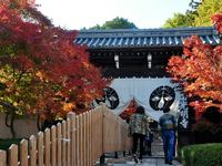 京都光明寺の紅葉