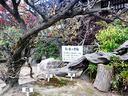 京都勧修寺の紅葉