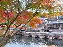 京都宇治塔の島の紅葉