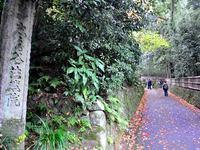 京都法然院の紅葉