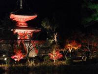京都大覚寺の紅葉