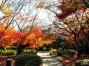 京都勝持寺の紅葉