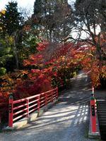 京都正法寺の紅葉