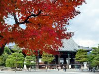 京都清涼寺の紅葉