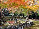 京都法輪寺の紅葉