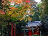京都山崎聖天の紅葉