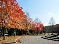 京都宝ヶ池の紅葉