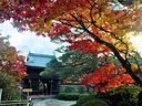 京都源光庵の紅葉