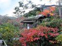 京都光悦寺の紅葉