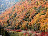京都亀山公園の紅葉