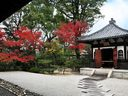 京都建仁寺の紅葉