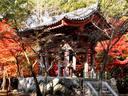 京都醍醐寺の紅葉