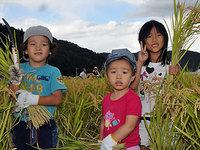 稲刈り収穫祭