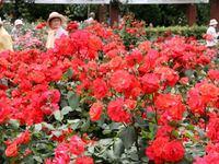 府立植物園バラ園