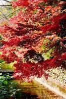 西芳寺川の紅葉