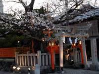 辰巳大明神、桜