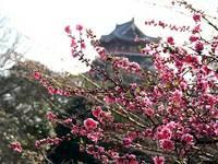 ハナモモと伏見城