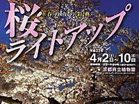 京都府立植物園桜ライトアップ