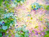 渡邉季史子「深呼吸する植物」