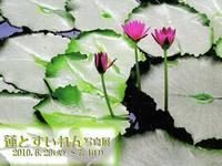 蓮とすいれん写真展 by 黒川扶子