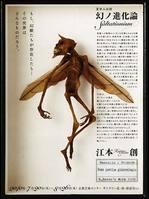 夏休み企画「幻ノ進化論―Saltationism」展 photo by 森脇健夫