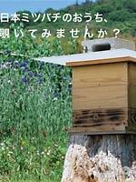 巣箱×アート展~巣箱はアートだ!