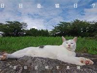 日日是猫日7~吉田正明写真展