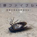 ジェットダイスケ 写真展「空蝉ファイナル+」