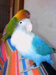 bird_riu.jpg