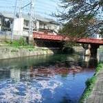 """""""花筏"""" 鳥羽街道疎水高橋橋付近投稿者:ユリカモメさん"""