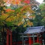 京都紅葉情報2010