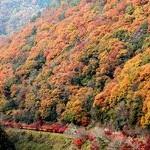 嵐山亀山公園Kameyama Park, Arashiyama