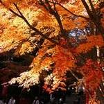 醍醐寺Daigo-ji Temple