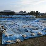 税金の使い方おかしい 宇治市「太閤堤跡」歴史公園に80億円