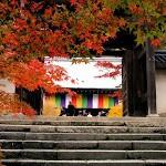 京都紅葉情報2008