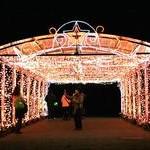 府立植物園 観覧温室夜間開園&クリスマス・イルミネーション