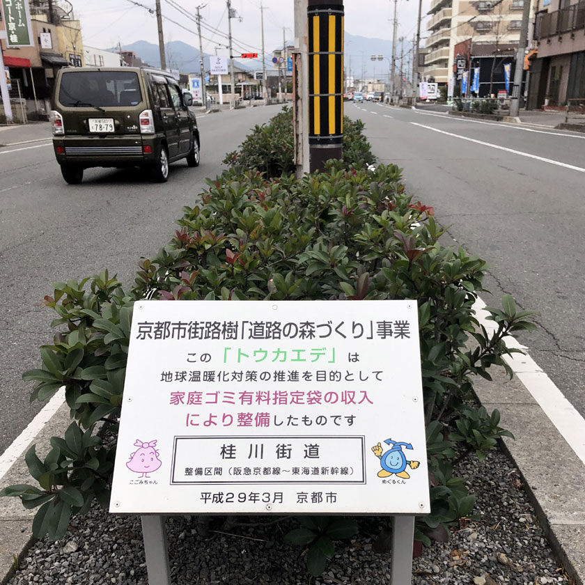 街路樹整備